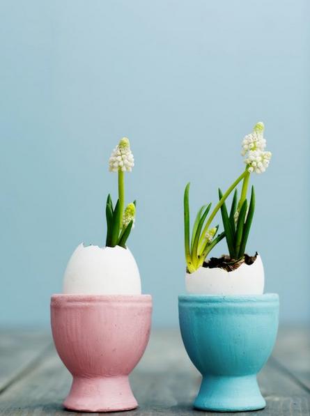 Eggshell floristry  © Shifra Jumelet of A Cup of Life via Pinterest