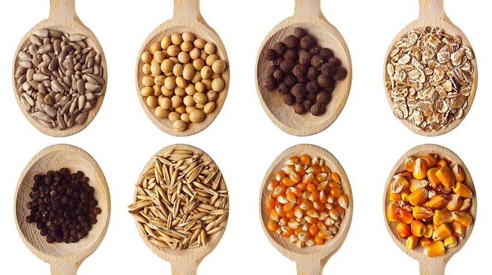 Ingredients for your DIY plant drink: seeds, nuts, grains and legumes © AND SOY