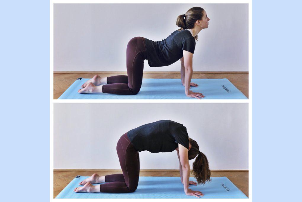 Guten Morgen Mit Yoga Kombination Katze Kuh Verival Blog