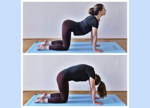 Yoga Katze-Kuh