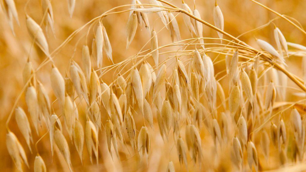 Hafer enthält viele langkettige Kohlenhydrate