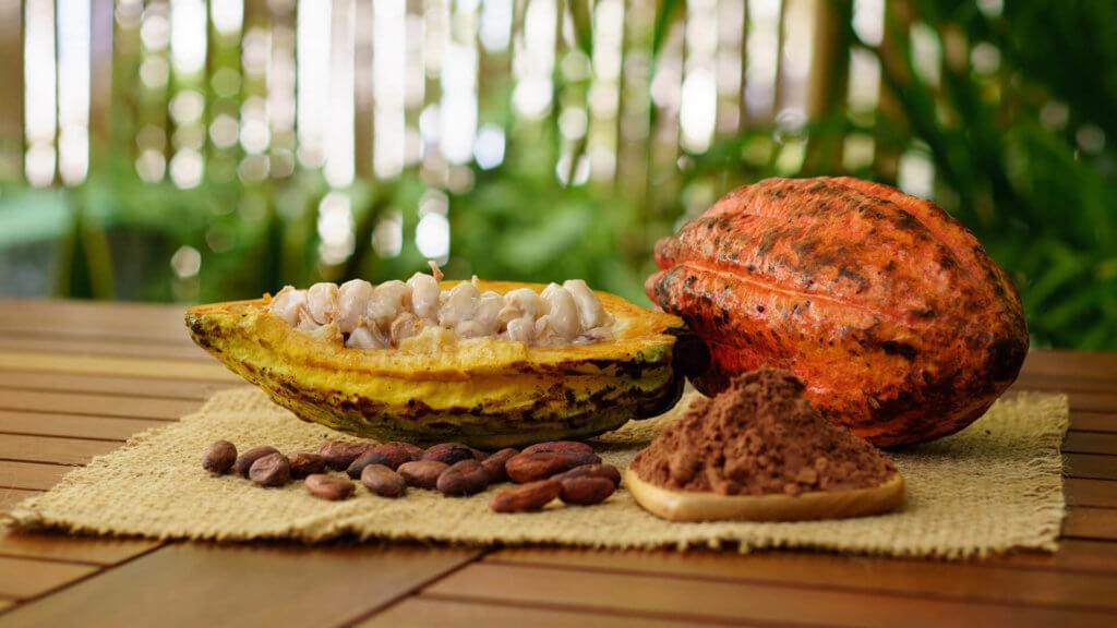 Superfoods – Malvengewächse Kakao Pflanze