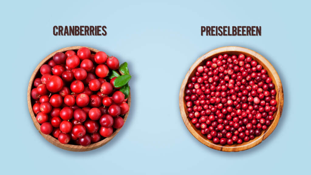 Infografica Mirtilli rossi e mirtilli rossi