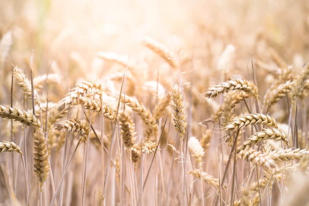 Getreide TCM
