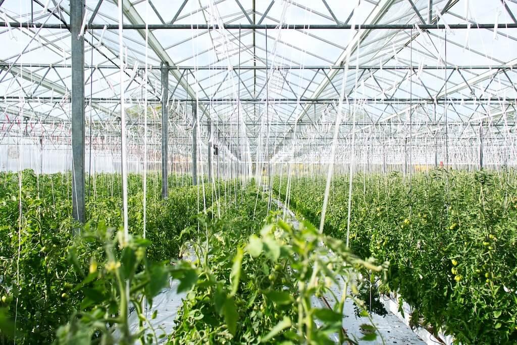 Gewächshaus vs. nachhaltigen saisonaler Anbau