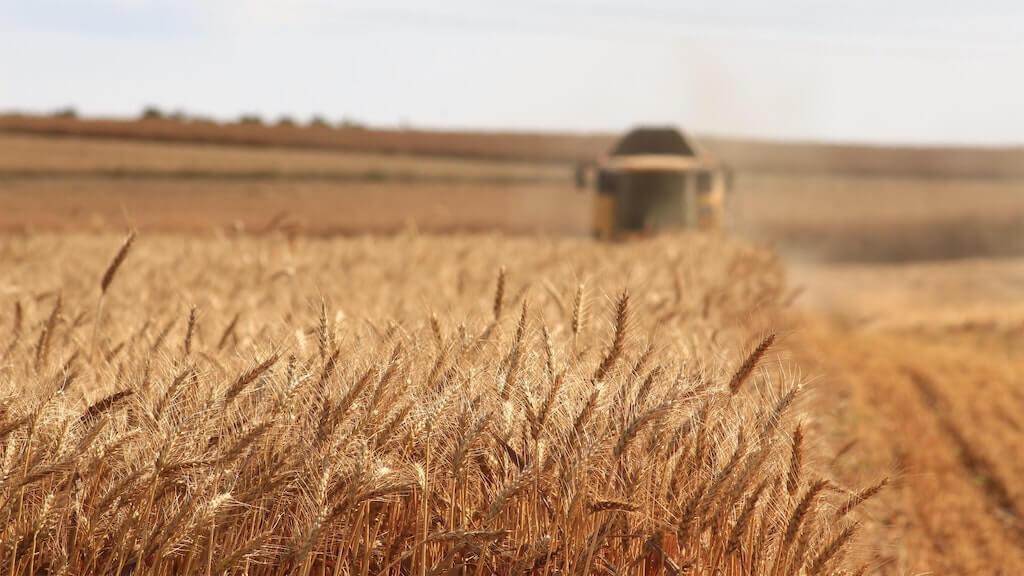 Landwirtschaft Hochleistungsweizen