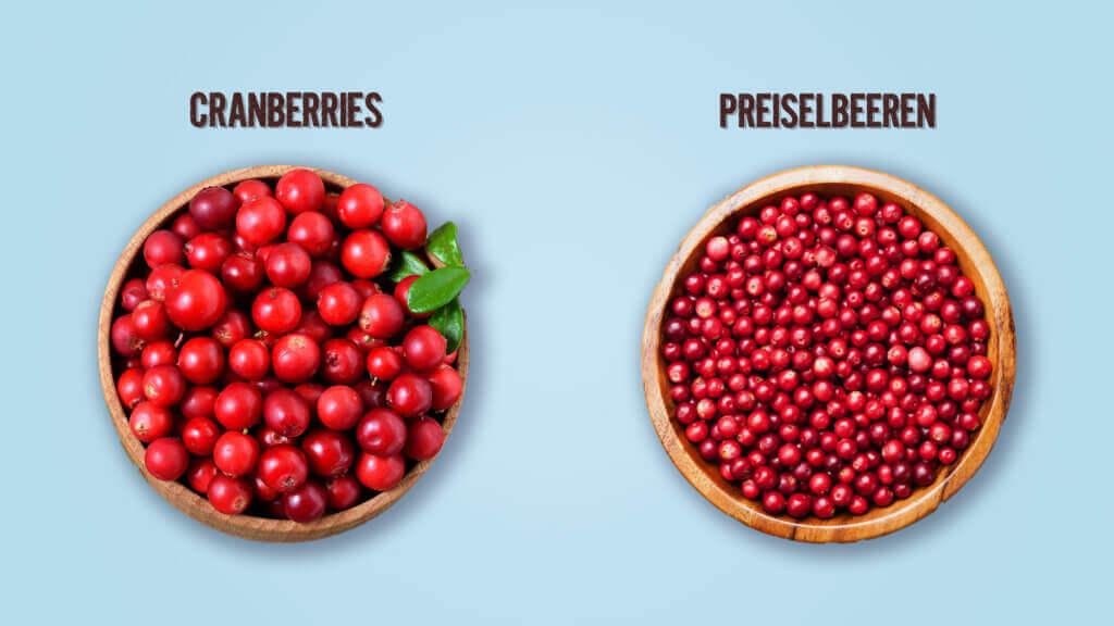 Preiselbeeren Cranberrys Unterschied