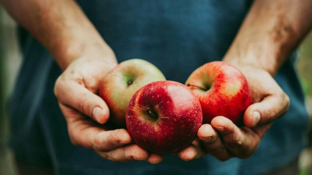 Frutta Paleo Nutrition