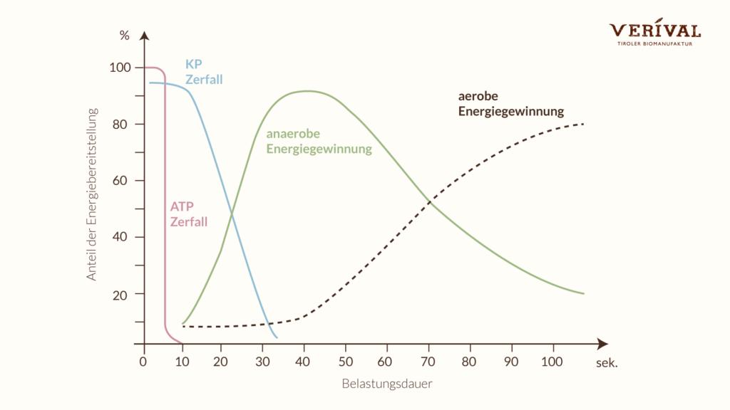Energiestoffwechsel bei Athleten