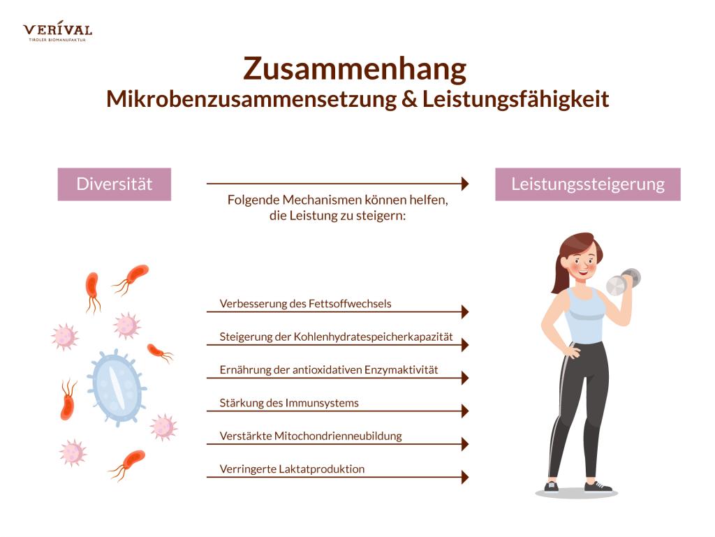Der Zusammenhang zwischen Leistungsfähigkeit und der Mikrobenzusammensetzung